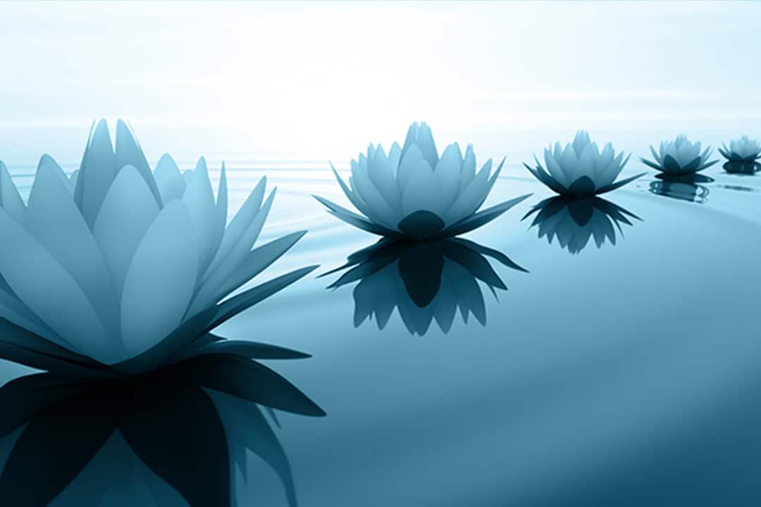 Lotusblüten im Sonnenuntergang als Symbol für die Lotus Notes Migration