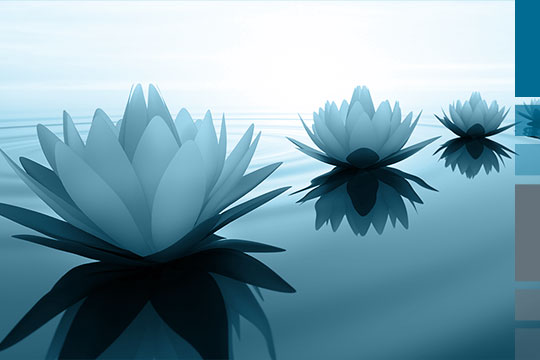 Lotus blossoms in the sunset as a symbol for the migration of Lotus Notes